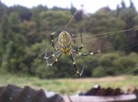 Spider100507