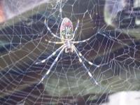 Spider100511