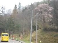 Sakura015