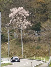 Sakura2_004
