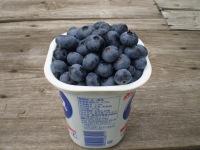 Blueberry009